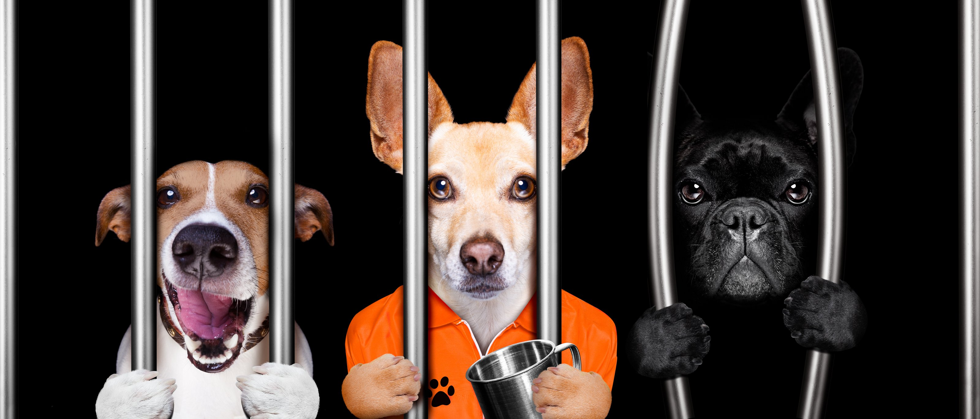 Puppies In Jail